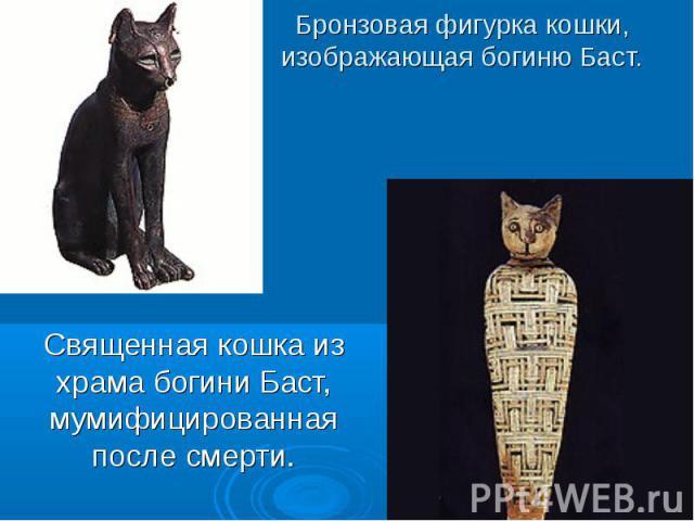 Бронзовая фигурка кошки, изображающая богиню Баст. Священная кошка из храма богини Баст, мумифицированная после смерти.