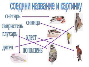 соедини название и картинку