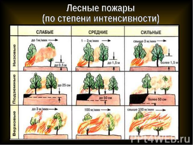 Лесные пожары(по степени интенсивности)