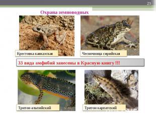 Охрана земноводных 33 вида амфибий занесены в Красную книгу !!!