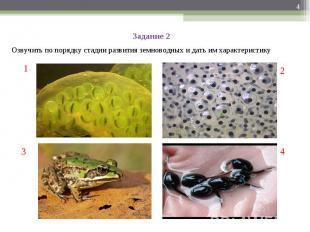 Задание 2Озвучить по порядку стадии развития земноводных и дать им характеристик