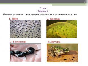 Ответ Задание 2Озвучить по порядку стадии развития земноводных и дать им характе