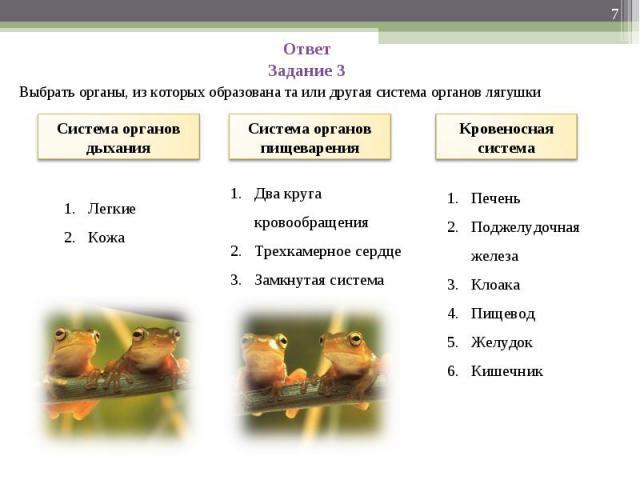 Ответ Задание 3 Выбрать органы, из которых образована та или другая система органов лягушки