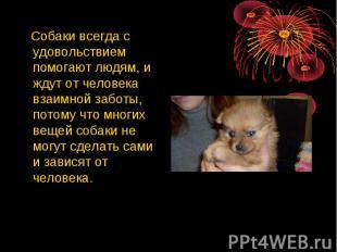 Собаки всегда с удовольствием помогают людям, и ждут от человека взаимной заботы