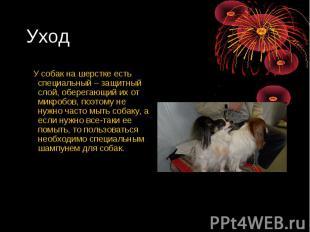 Уход У собак на шерстке есть специальный – защитный слой, оберегающий их от микр