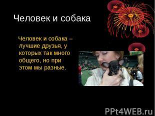Человек и собака Человек и собака – лучшие друзья, у которых так много общего, н
