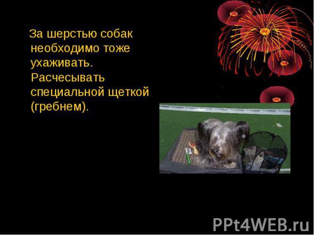 За шерстью собак необходимо тоже ухаживать. Расчесывать специальной щеткой (гребнем).