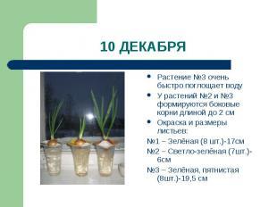 10 ДЕКАБРЯ Растение №3 очень быстро поглощает водуУ растений №2 и №3 формируются