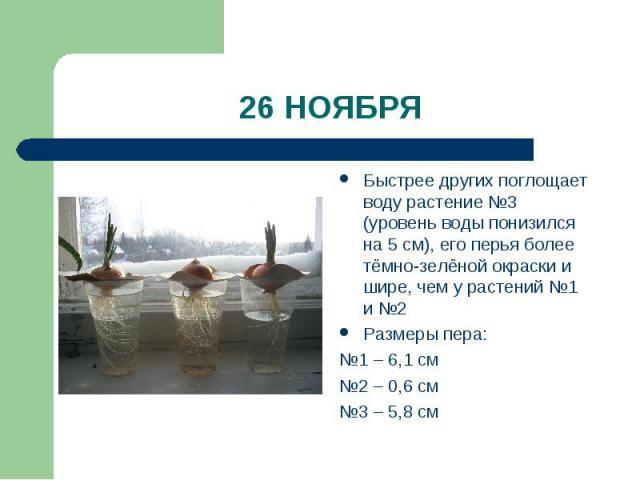 26 НОЯБР Я Быстрее других поглощает воду растение №3 (уровень воды понизился на 5 см), его перья более тёмно-зелёной окраски и шире, чем у растений №1 и №2Размеры пера:№1 – 6,1 см №2 – 0,6 см№3 – 5,8 см