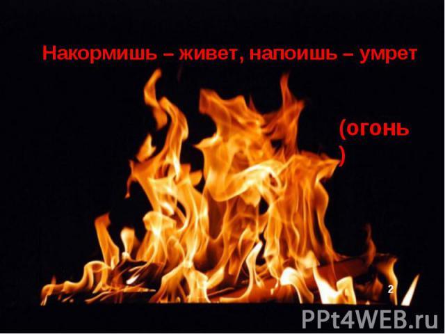 Накормишь – живет, напоишь – умрет (огонь)