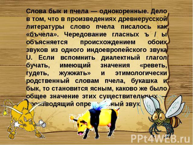 Слова бык и пчела — однокоренные. Дело в том, что в произведениях древнерусской литературы слово пчела писалось как «бъчела». Чередование гласных ъ / ы объясняется происхождением обоих звуков из одного индоевропейского звука U. Если вспомнить диалек…