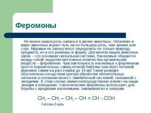 Феромоны Не менее важна роль запаха и в жизни животных. Обоняние в мире животных