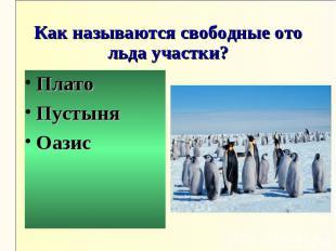 Как называются свободные ото льда участки?ПлатоПустыняОазис