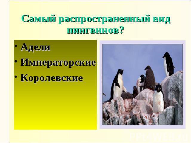 Самый распространенный вид пингвинов?АделиИмператорскиеКоролевские
