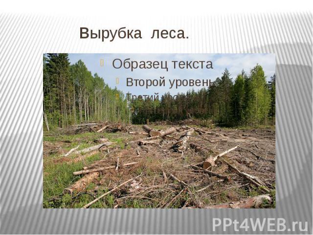 вырубка леса.
