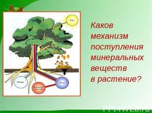 КаковКаковмеханизмпоступленияминеральныхвеществв растение?