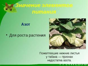 Значение элементов питания АзотДля роста растения