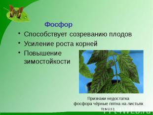 ФосфорСпособствует созреванию плодовУсиление роста корнейПовышениезимостойкости