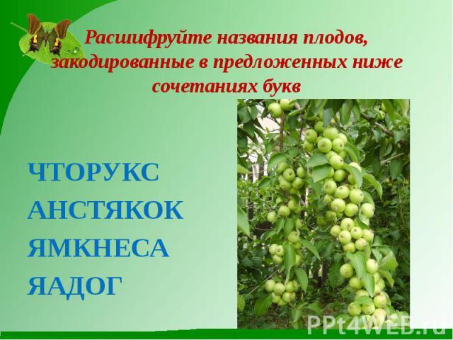 Расшифруйте названия плодов, закодированные в предложенных ниже сочетаниях буквЧТОРУКСАНСТЯКОКЯМКНЕСАЯАДОГ
