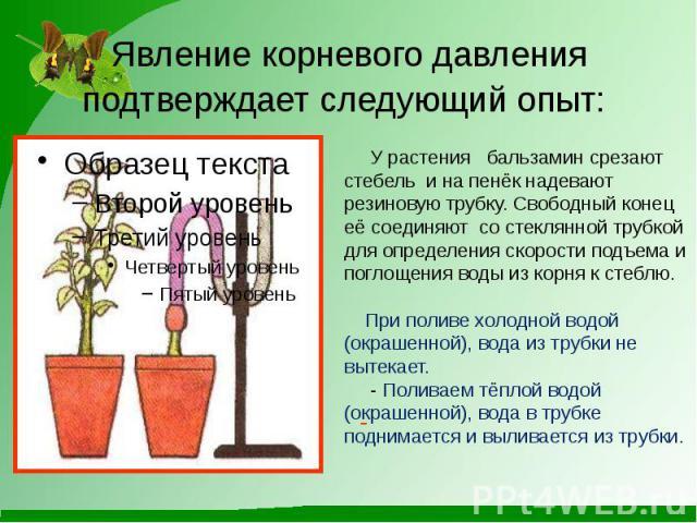 Растения поднимающие давление