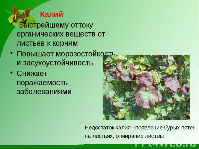 Калий Быстрейшему оттоку органических веществ от листьев к корнямПовышает морозостойкость и засухоустойчивостьСнижает поражаемость заболеваниями