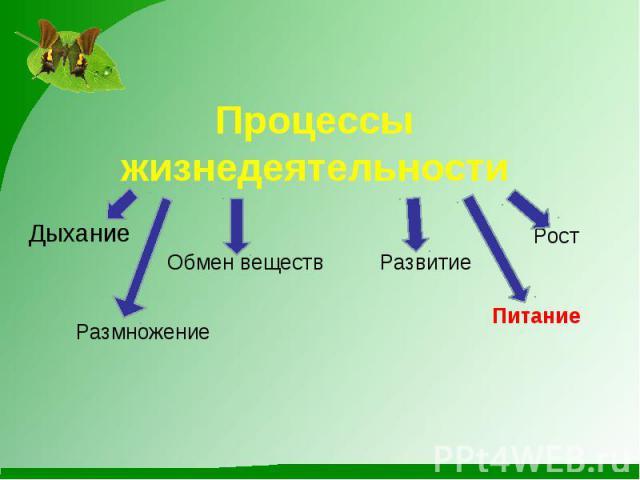 Процессы жизнедеятельности