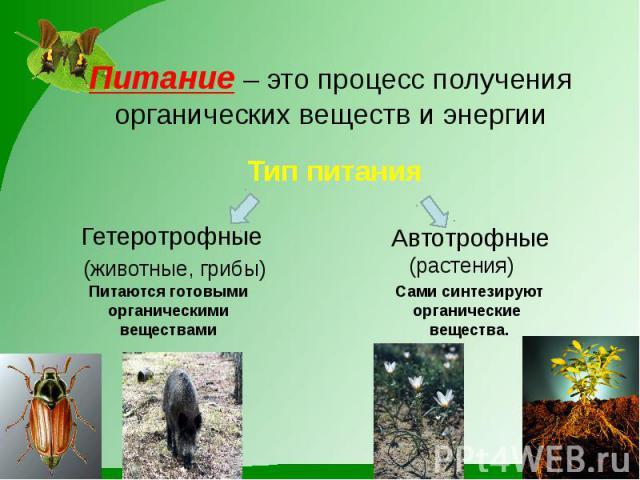 Питание – это процесс получения органических веществ и энергии Гетеротрофные (животные, грибы)