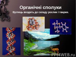 Органічні сполуки Вуглець входить до складу рослин і тварин.
