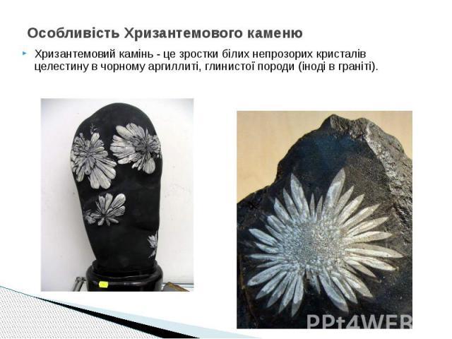 Особливість Хризантемового каменю Хризантемовий камінь - це зростки білих непрозорих кристалів целестину в чорному аргиллиті, глинистої породи (іноді в граніті).