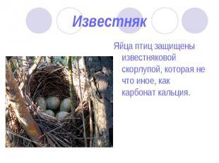 Яйца птиц защищены известняковой скорлупой, которая не что иное, как карбонат ка