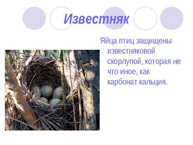 Яйца птиц защищены известняковой скорлупой, которая не что иное, как карбонат кальция. Яйца птиц защищены известняковой скорлупой, которая не что иное, как карбонат кальция.