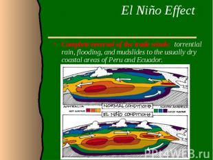 El Niño Effect Complete reversal of the trade winds: torrential rain, flooding,