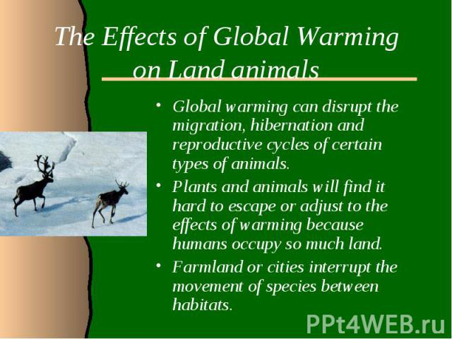 The Effects of Global Warming on Land animalsGlobal warming can disrupt the migration, hibernation and reproductive cycles of certain types of animals. Plants and animals will find it hard to escape or adjust to the effects of warming because humans…