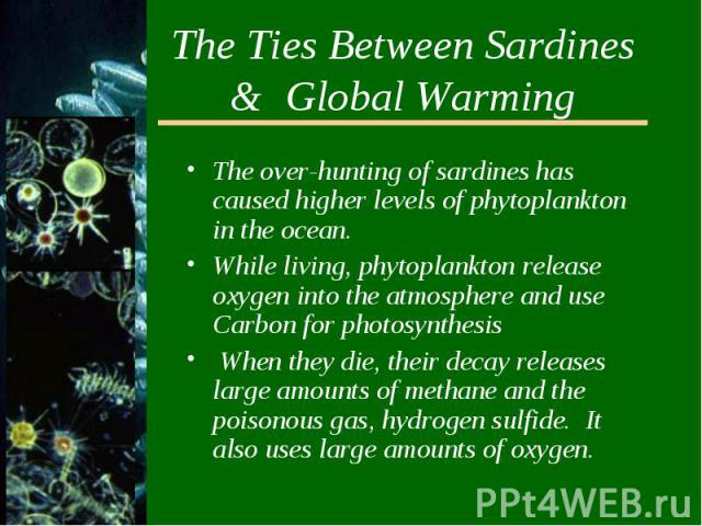 The Ties Between Sardines & Global WarmingThe over-hunting of sardines has caused higher levels of phytoplankton in the ocean.While living, phytoplankton release oxygen into the atmosphere and use Carbon for photosynthesis When they die, their d…