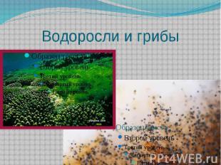 Водоросли и грибы