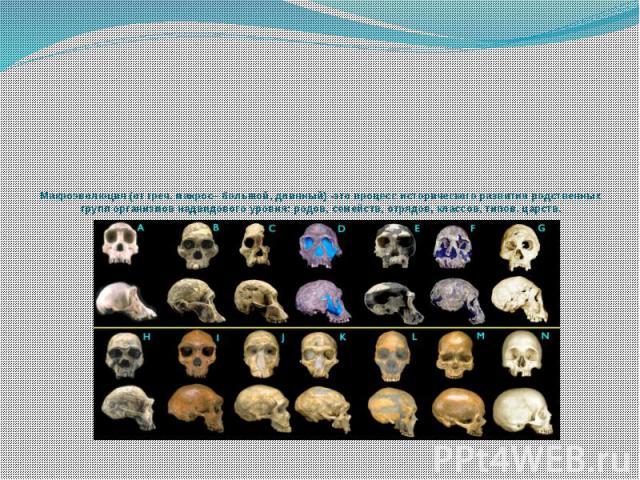 Макроэволюция (от греч. макрос– большой, длинный) -это процесс исторического развития родственных групп организмов надвидового уровня: родов, семейств, отрядов, классов, типов, царств.