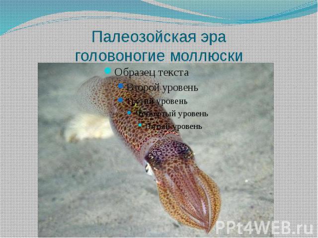 Палеозойская эра головоногие моллюски
