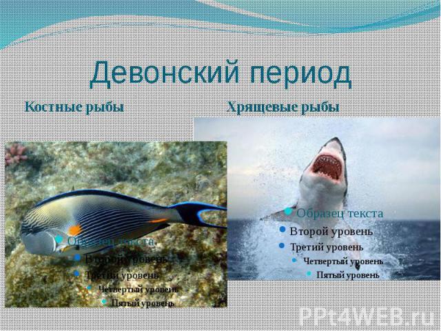 Девонский период Костные рыбы