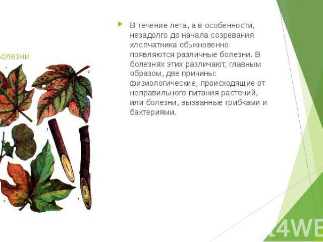 Болезни В течение лета, а в особенности, незадолго до начала созревания хлопчатника обыкновенно появляются различные болезни. В болезнях этих различают, главным образом, две причины: физиологические, происходящие от неправильного питания растений, и…