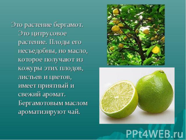 Это растение бергамот. Это цитрусовое растение. Плоды его несъедобны, но масло, которое получают из кожуры этих плодов, листьев и цветов, имеет приятный и свежий аромат. Бергамотовым маслом ароматизируют чай.