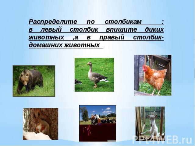 Распределите по столбикам : в левый столбик впишите диких животных ,а в правый столбик-домашних животных