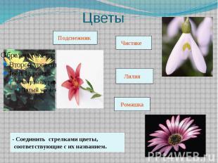 Цветы - Соединить стрелками цветы, соответствующие с их названием.