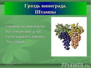 Гроздь винограда. Штампы Близнецы на тонкой ветке Все лозы родные детки.Гостю ка