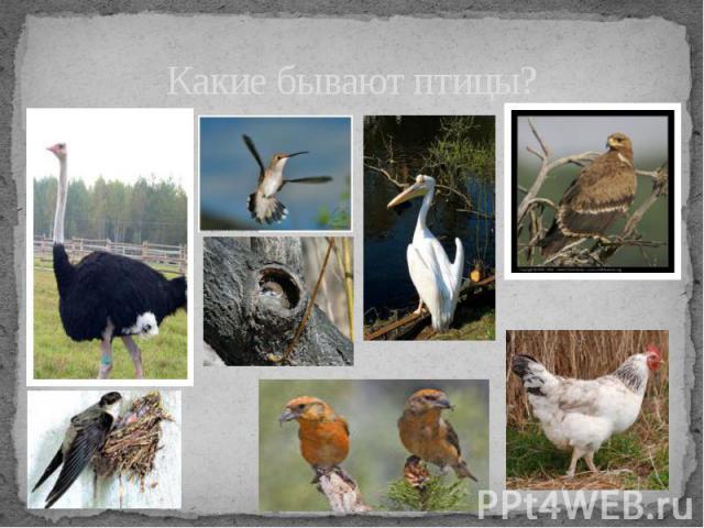 Какие бывают птицы?