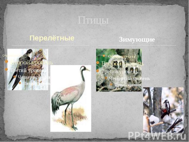 Птицы Зимующие Перелётные