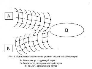 Рис. 1. Принципиальная схема строения механизма эхолокации А- Анализатор, создаю
