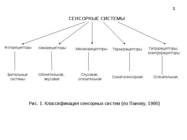 Рис. 1. Классификация сенсорных систем (по Панову, 1980)