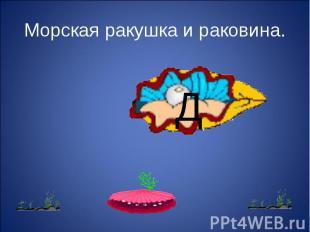 Морская ракушка и раковина.