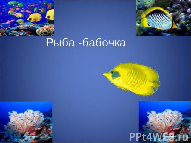 Рыба -бабочка