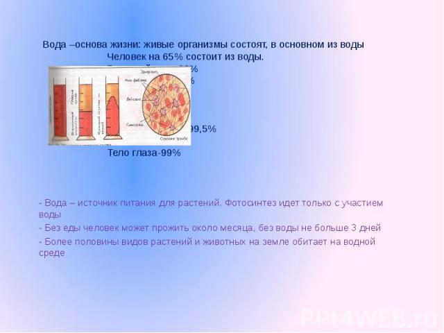 Вода –основа жизни: живые организмы состоят, в основном из водыЧеловек на 65% состоит из воды.Головной мозг-83%Спинной мозг-74%Сердце-79%Кожа-72%Скелет-46%Желудочный сок-99,5%Слюна-99,4%Тело глаза-99% - Вода – источник питания для растений. Фотосинт…